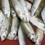 Vis eten tijdens de zwangerschap: gevolgen voor je kindje?
