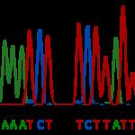 Tuberculose genezen met algoritmes
